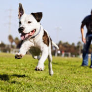 Ways to Manage Diabetes in Dogs